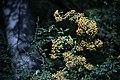 گیاهان در پاییز - باغ بوتانیکال تفلیس 13.jpg