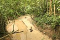 উদ্যানের ভেতর দিয়ে বয়ে যাওয়া ছড়া (প্রাকৃতিক নালা).jpg