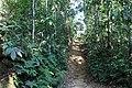 লাউয়াছড়া জাতীয় উদ্যান 13.jpg