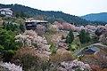 吉野山 辰の尾地区の桜 2014.4.12 - panoramio.jpg