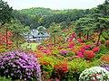 塩船観音寺のツツジ (Azalea Festival in Ome) 03 May, 2011 - panoramio.jpg