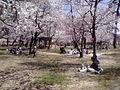 桜野公園2009041212330001.jpg