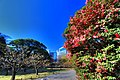 浜離宮 - panoramio (1).jpg