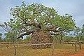 00 1997 Derby, Westaustralien - Boab Prison Tree.jpg