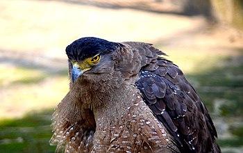 02 Eagle.jpg