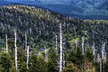 15-19-164 view from clingmans dome - panoramio.jpg