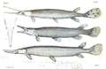 1844 BostonJournal NaturalHistory v4 illus9.png