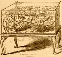 A drawing in brown ink on an ocher background. A rectangular glass aquarium tank sits on a wooden stand with carved, curled legs, and contains two fish as well as plants with wavy grass-like léaves.