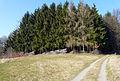200802241151a (Hartmann Linge) Weschnitztal.jpg