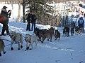 2008 Iditarod Willow (2312961438).jpg