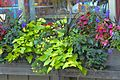 2008 flower box 2907451321 5b2cccfe86 o.jpg