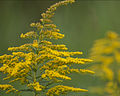 2012 Photo Contest - Plants Category (7943781996).jpg