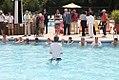 2012 World's Largest Swimming Lesson (7422182306).jpg