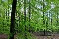 20190424 boswachterij Gieten-Borger.jpeg