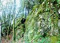 215 Edern Roc'h Tourment Schistes quartziteux.JPG