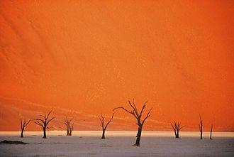 The Fall (2006 film) - Image: 28 Abgestorbene Bäume im Dead Vlei in der Namib Wüste, fotografiert 1997