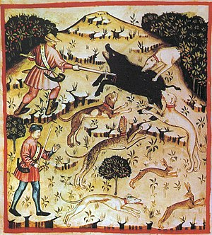 Boar hunting - A 14th-century depiction of boar hunting with hounds