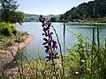 38 Turismo Emilia Romagna 8 giugno 2019 Parco dei laghi di Suviana e Brasimone, un ringraziamento speciale alle guide Eugenia e Walter.jpg