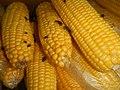 4690Common houseflies and delicacies Bulacan foods 28.jpg