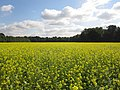 49849 Wilsum, Germany - panoramio - Roland Meijerink (4).jpg