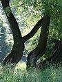 617683 A 683 Krakow Krzesławice Wankowicza 25 park w zespole dworsko parkowym 34.JPG