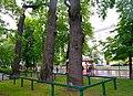 80-385-5007 Kyiv Vyshgorodska Oak SAM 0039.jpg