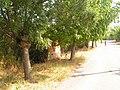8921 Omarchevo, Bulgaria - panoramio (53).jpg