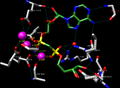 ADP Ribose Held in Complex of Enzyme (H-bonds and Mg ions shown).png
