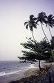 ASC Leiden - van Achterberg Collection - 1 - 006 - Des palmiers au bord de la plage - Kribi, Cameroun - 6-12 février 1997.tif