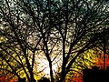 A Tree at Winter near the Sunset - panoramio.jpg