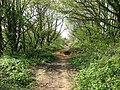 A narrow path - geograph.org.uk - 1278043.jpg