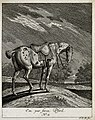 A par-force horse with a docked tail in a paddock. etching b Wellcome V0021146ER.jpg