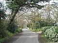 A peaceful lane - geograph.org.uk - 742616.jpg