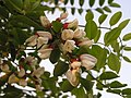 Ab plant 2131.jpg
