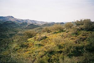 Highland - Highland shrubs in Agua Fria National Monument, Arizona, USA