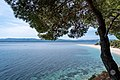 Aleppo pine (Pinus halepensis) with the Golden Horn beach on the background, Bol, Croatia (PPL3-Altered) julesvernex2.jpg