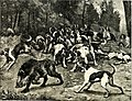 All about animals. Facts, stories and anecdotes (1900) (14755351766).jpg