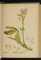 American Medicinal Plants-0719.png