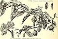 American gardening (1892) (17529383613).jpg