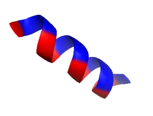 Hydrophobic collapse - Stylized cartoon showing the overall polarity of either side of an amphipathic alpha helix. One longitudinal side is nonpolar and interacts with the hydrophobic core of the peptide, while the polar side interacts with the polar solvent.