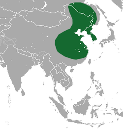 Amur Hedgehog range