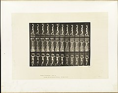 Animal locomotion. Plate 124 (Boston Public Library).jpg