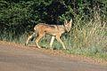 Animals at Pilanesberg National Park 16.jpg