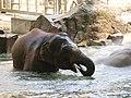 Antwerp Zoo (12210698945).jpg