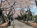 Aoyama-Cemetery-01.jpg