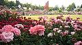 Aramaki rose park12s2400.jpg