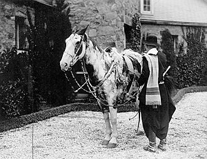 Gato y mancha dos caballos legendarios