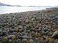 Ardmore Beach - geograph.org.uk - 262423.jpg