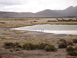Chinchorro culture - Landscape of Arica, Chile