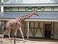 Artis Zoo, Amsterdam (7621080648).jpg